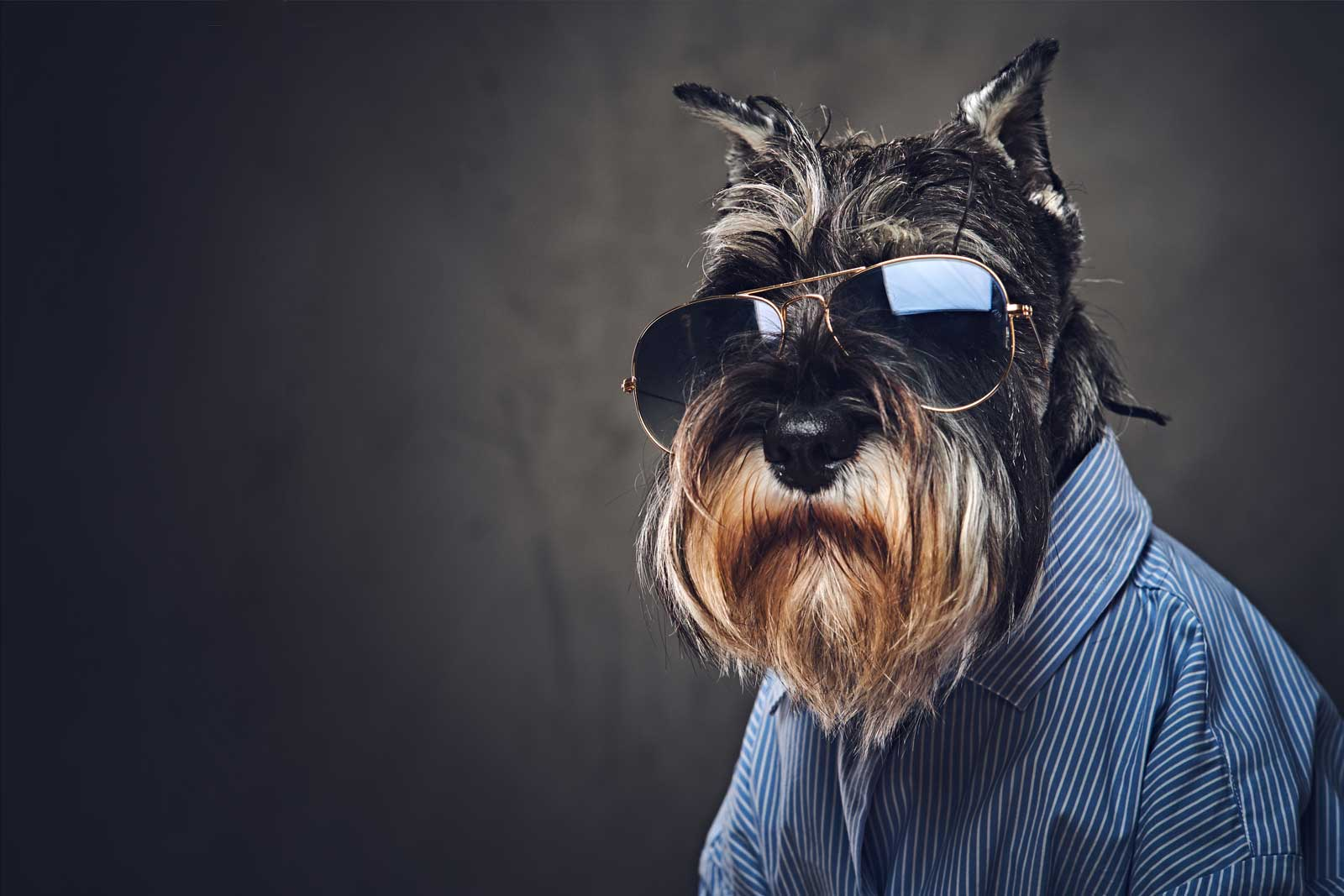 Picture of a Dog with Shades